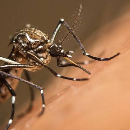 What You Need To Know About Yellow Fever