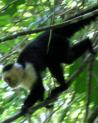 primate_1