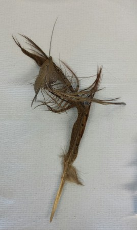 Feather before treatment