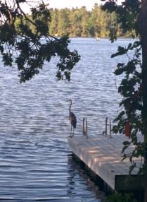 Heron on the dock