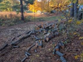 Wood to chop