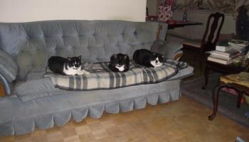 Photo of the Gerken Cats