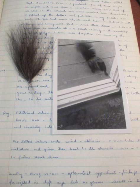 My pet squirrel in 1973.
