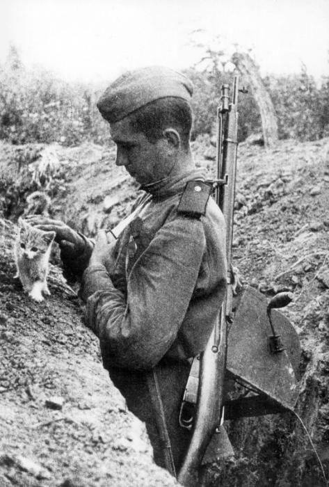 When a kitten stopped a war for one day. Both the Germans and Russians declared a cease fire until the kitten was safely out of the way.
