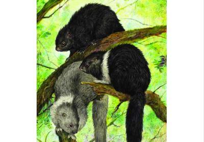 Scientists find exceptional species diversity on ...