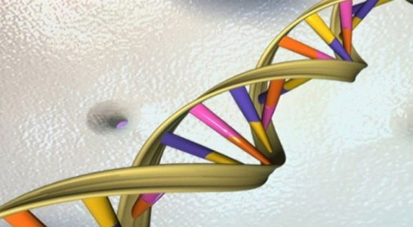 Researchers Found More Evidence On How DNA Evolved
