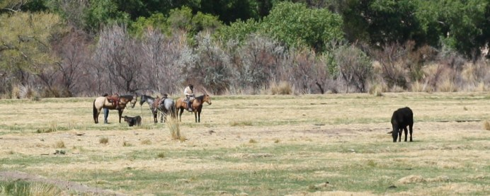 Although this area was crawling with cowboys 150 years ago, these were the only horse-mounted men I saw all day. Photo: Zac Kurylyk