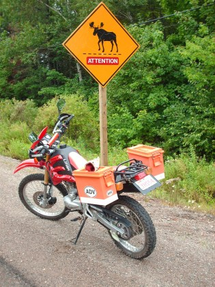 Watch out for moose in Quebec and New Brunswick. Photo: Zac Kurylyk