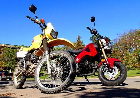 Even next to a diminutive bike like a Suzuki DR200, the Grom is small. Photo: Rob Harris