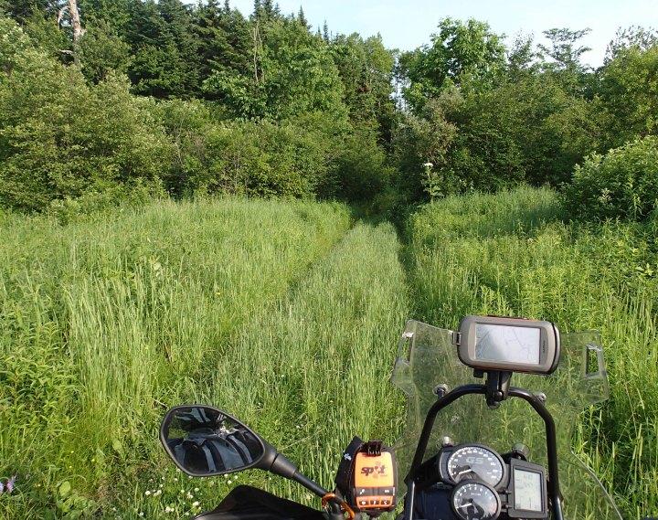 GS_grassy_trail