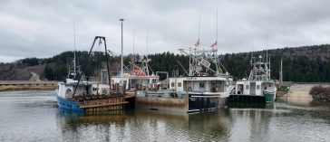 All tied up? The lobsters must not be hitting hard if the boats are at the wharf with prices high in early season.