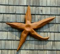 Whimsical Starfish, by David Taylor