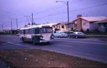 calgary-bus