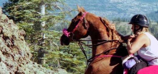 Sturgeon Creek Arabians: Breeding for Endurance