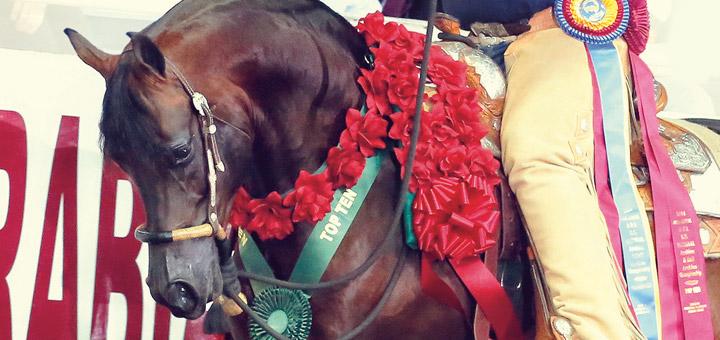 Canadian Arabian Horse News January 2015