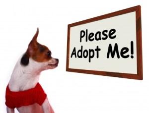 adopt a pet human society