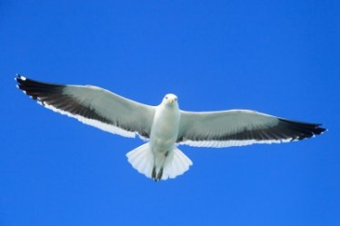 mortgage free seagull in blue sky