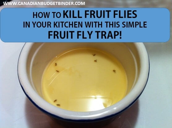 how to kill fruit flies fast with this simple fruit fly trap the grocery game challenge 4. Black Bedroom Furniture Sets. Home Design Ideas