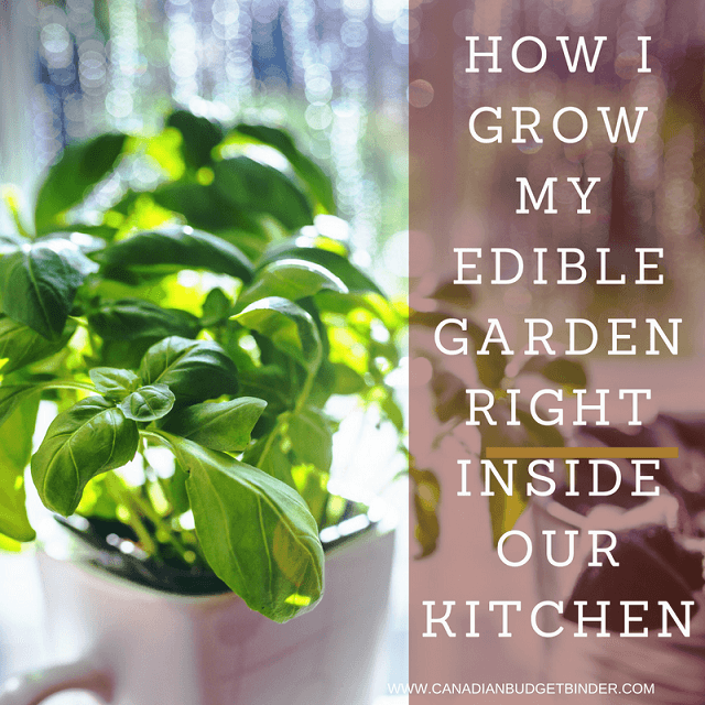 Kitchen Garden November: How I Grow My Edible Garden Right Inside Our Kitchen: The