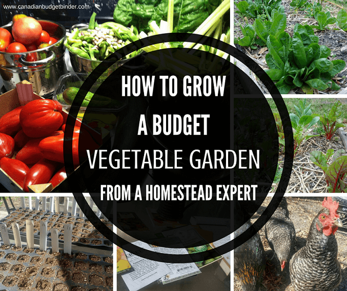 How To Grow A Budget Vegetable Garden From A Homestead Expert : The Grocery Game Challenge 2017 #3-4 June 19- July 2