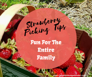 Strawberry Picking Tips (Fun For The Entire Family) : The GGC  2018 #1 July 2-8