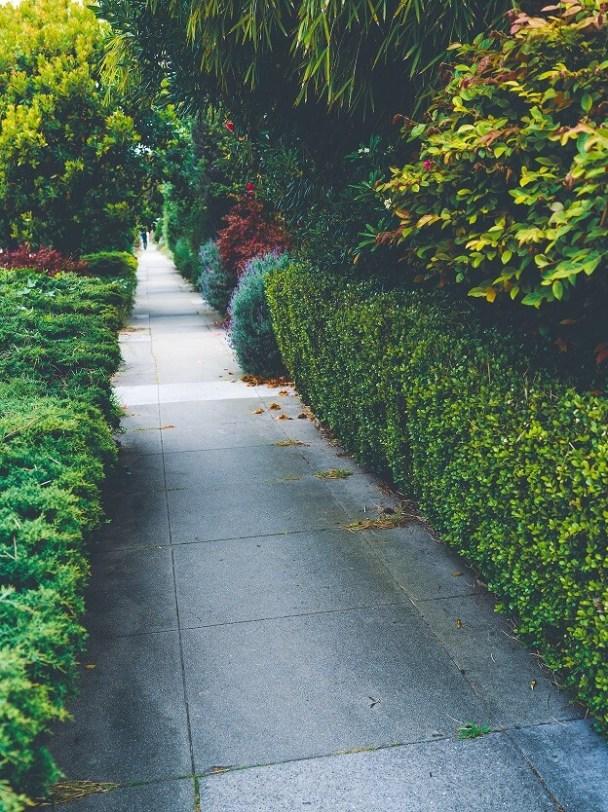 manicured shrubs pathway