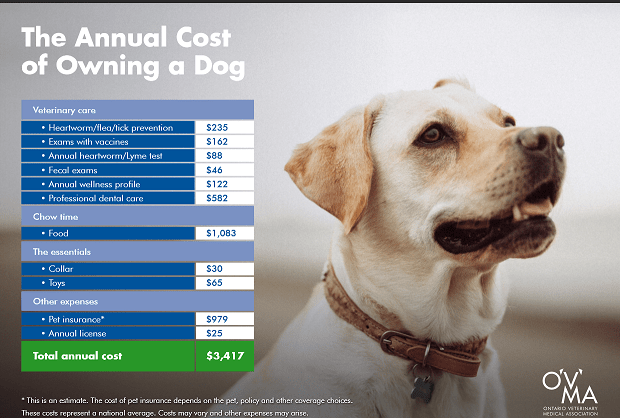 dog costs ontario