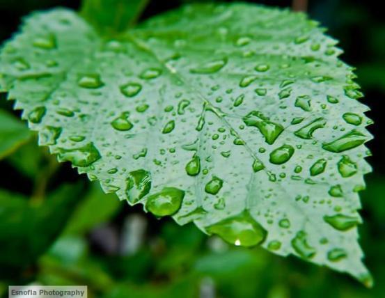 water-droplets-green-leaf-av