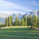 Elk Grazing on Jasper Park Lodge Golf Course