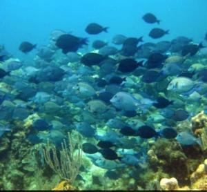 Snorkelling view, Roatan, Honduras