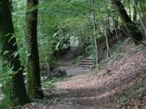 Running trails in Arlesheim. Photo: CanadianKate