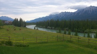 Classic Canmore morning: elk grazing next to the river under the mountains