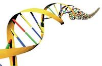 Como saber se o filho é seu sem o DNA?