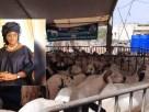 moutons tabaski marieme sall
