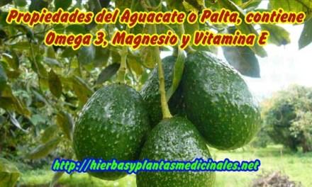 Propiedades del Aguacate o Palta, Omega 3, Magnesio y Alimentos con Vitamina E