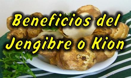 Beneficios del Jengibre o Kion, Propiedades del Jengibre para Adelgazar, Regula el Metabolismo