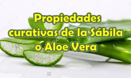 Propiedades Curativas de la Sabila o Aloe Vera – Sabila Planta Medicinal – Aloe Vera Beneficios