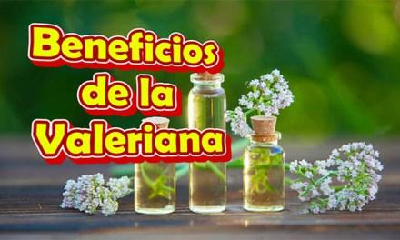 Valeriana para que Sirve y como se Prepara, Beneficios para la Salud