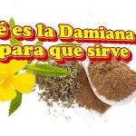 Qué es la Damiana, para que sirve y sus beneficios