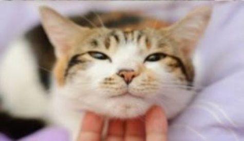 ronronar-dos-gatos-canal-de-estimacao