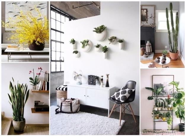como puedo decorar mi casa con plantas naturales