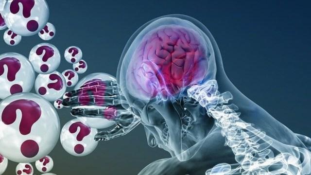 cerebro presente pasado