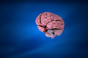 toma de decision cerebro