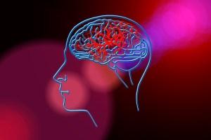 cerebro nutrición como se alimenta