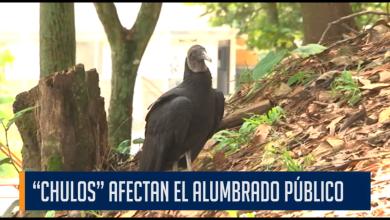 """""""CHULOS"""" AFECTAN EL ALUMBRADO PÚBLICO"""