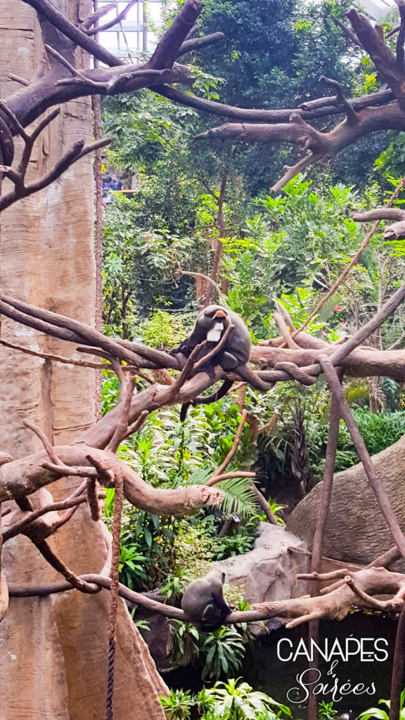 Monkey in a tree at the Omaha zoo