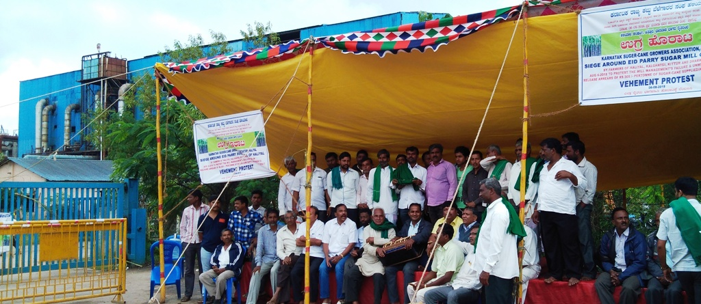 sugar cane growers stir at 4th day