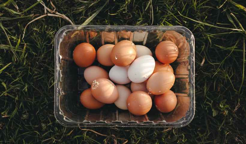 food bird farm easter