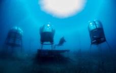 Jardin de Nemo (14)