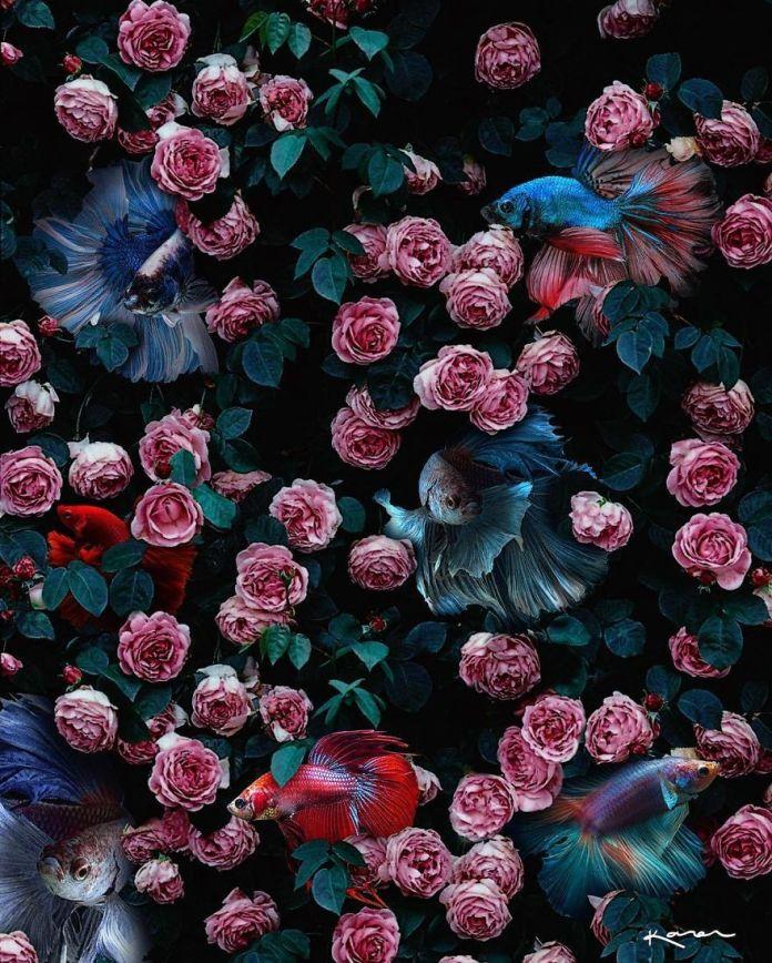 Pez y Pajares entre flores